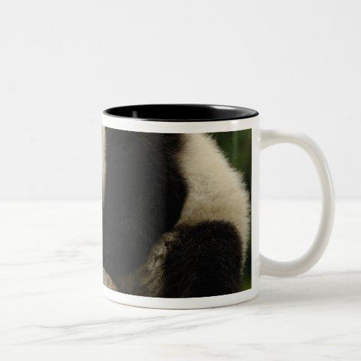 Melanoleuca) del Ailuropoda del bebé de la panda g Tazas De Café