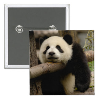 Melanoleuca del Ailuropoda del bebé de la panda gi Pin Cuadrada 5 Cm