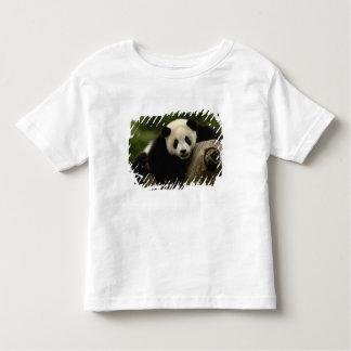 Melanoleuca) del Ailuropoda del bebé de la panda Playera