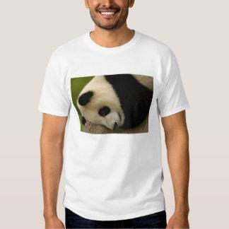Melanoleuca) del Ailuropoda del bebé de la panda Polera