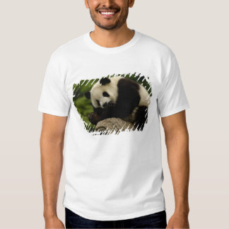 Melanoleuca) del Ailuropoda del bebé de la panda Remeras