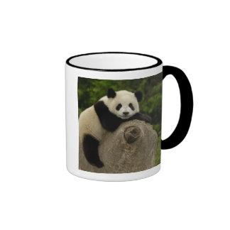Melanoleuca) del Ailuropoda del bebé de la panda Taza De Dos Colores