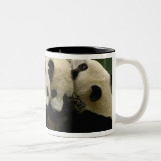 Melanoleuca) del Ailuropoda del bebé de la panda Taza De Dos Tonos