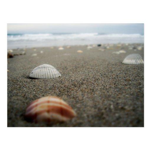 Melbourne beach, Florida Postcard