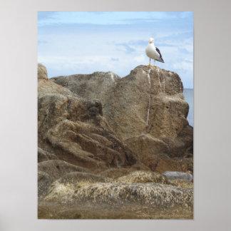Melbourne - Frankston Beach - Lonely Seagull Poster