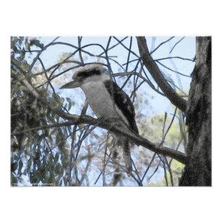 Melbourne - Kookaburra se sienta en el árbol de Cojinete