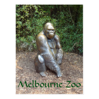 Melbourne Zoo Gorilla Postcard
