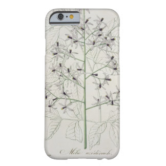 Melia Azedarach from 'Phytographie Medicale' by Jo Barely There iPhone 6 Case