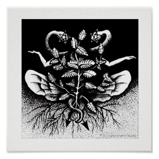 Melissa officinalis (Lemon Balm) - On White Poster