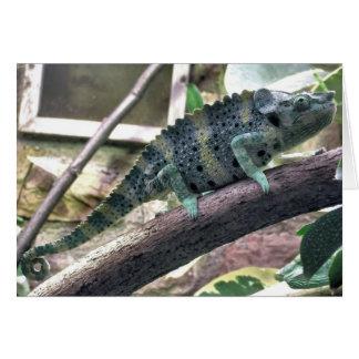 Meller's Chameleon - Chamaeleo melleri Greeting Card