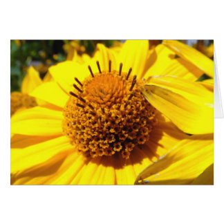Mellow Yellow   Greeting Cards
