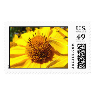 Mellow Yellow   Postage Stamps