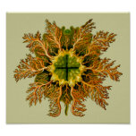 Melocactus de Cynthia, Ernst Haeckel Póster