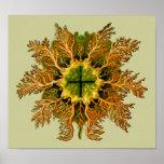 Melocactus de Cynthia, Ernst Haeckel Posters