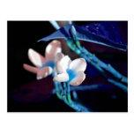 melocotón azul de la flor de los leus colorized
