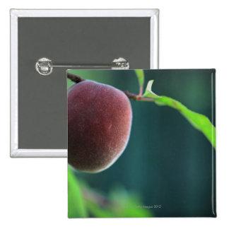 Melocotón en un árbol de melocotón pin cuadrado