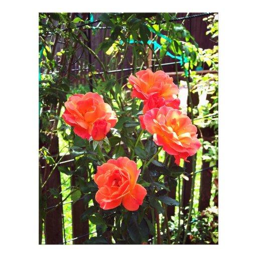 """Melocotón roses#1 folleto 8.5"""" x 11"""""""