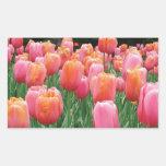 Melocotón y tulipanes rosados etiquetas