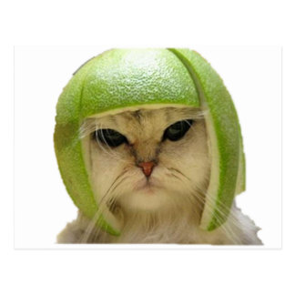 melon cat postcard