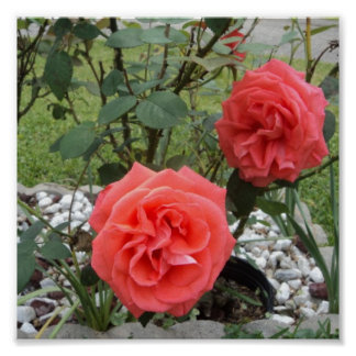 Melón Rosa rosado Impresiones