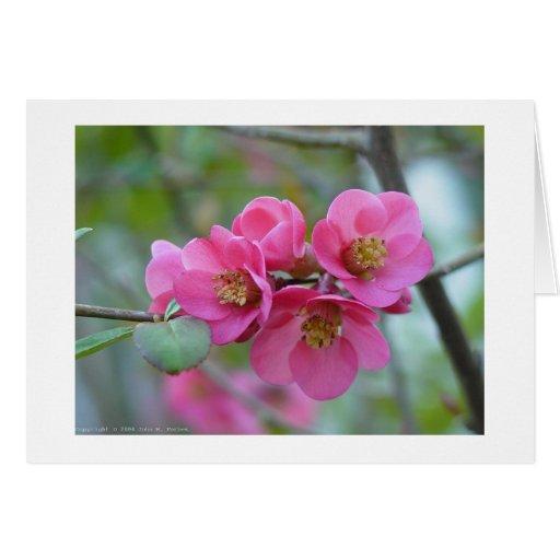 Membrillo rosado tarjetas