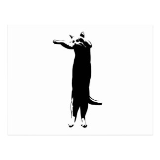 Meme largo del gato postal