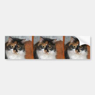 MeMeow Bumper Sticker