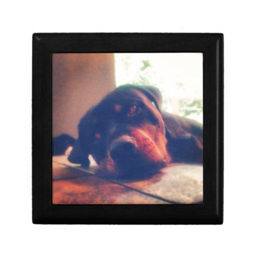 Memorias de Rottweiler Cajas De Regalo
