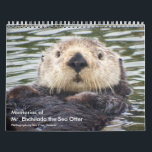 """Memories of Mr.Enchilada Calendar<br><div class=""""desc"""">Mr. Enchilada the sea otter was an iconic resident of the Moss Landing Harbor and California. He was loved not only by local people but also by female sea otters. He used to swim through the culverts to get to the slough ON the other side and but he started walking...</div>"""