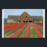 "Memories Of Spring. Photo Print<br><div class=""desc"">Skagit Valley Tulip Festival. Washington State.</div>"