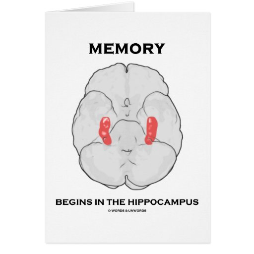 Memory Begins In The Hippocampus Greeting Card