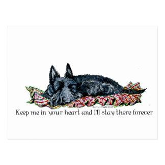 Memory of Scottish Terrier Postcard