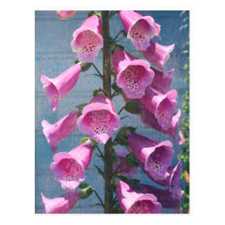 mendocino flower postcard