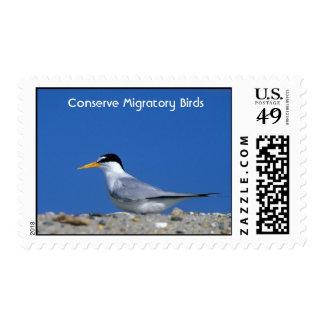Menos golondrina de mar conserva aves migratorias envio