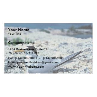 Menos golondrina de mar plantilla de tarjeta de negocio
