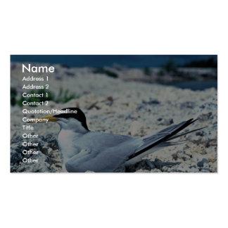 Menos golondrina de mar plantillas de tarjetas de visita