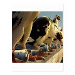 Mensaje animal abstracto de la paloma postales