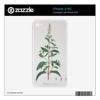 Mentha Piperita from 'Phytographie Medicale' by Jo Decal For The iPhone 4S
