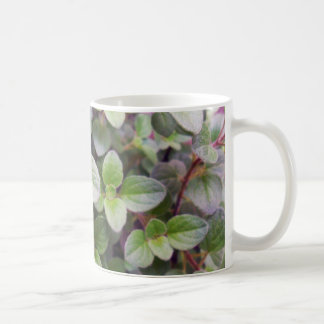 Mentha suaveolens mug