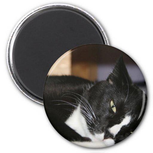 mentira blanco y negro del gato del smoking abajo  imanes para frigoríficos