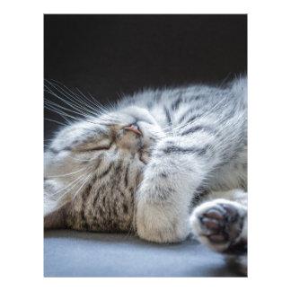 Mentira de plata negra del gatito del tabby plantilla de membrete