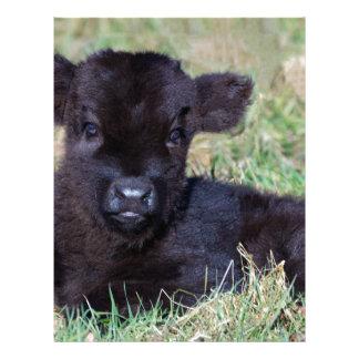 Mentira escocesa negra recién nacida del becerro plantilla de membrete