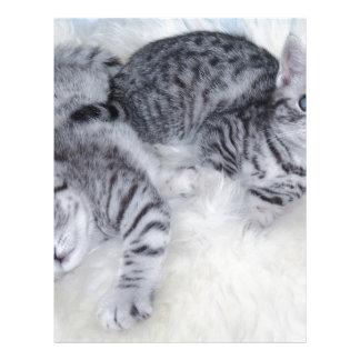 Mentira joven de dos gatos de tabby perezosa junto membrete