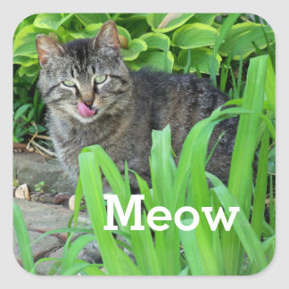 Meow Gray Tabby Cat in Garden Sticker
