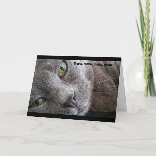 Funny Cat Birthday Card to from British Blue Shorthair Cat Show Kitten Lover