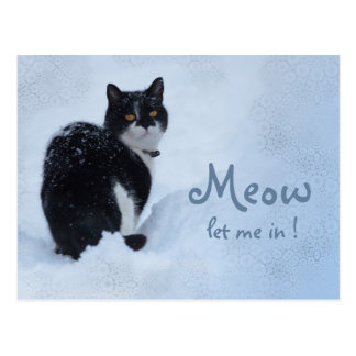 Meow Let me in! CC0826 Cat thoughts Postcard