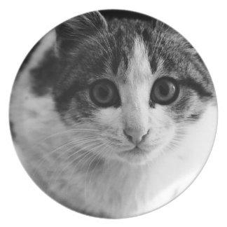 Meow plates
