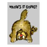 Meow's it Going Cartoon Cat Postcard