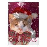 Meowy Christmas! Cards
