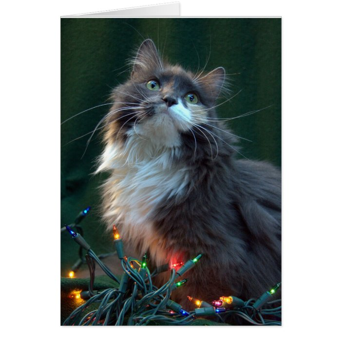 Meowy Christmas Holiday Cat Card